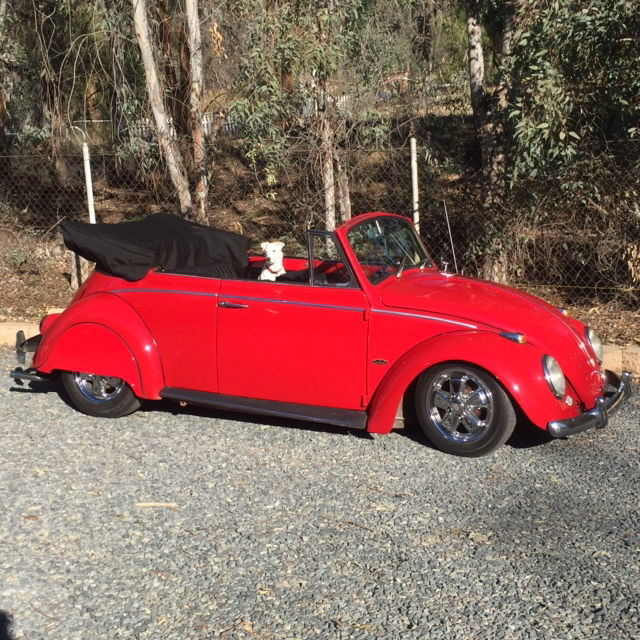 "1967 Vw Beetle Show Car For Sale Oldbug Com: 1965 VW Beetle Convertible ""Resto Cal"" Looker"